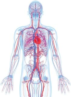 Blood Type Matters for Brain Health - Scientific American