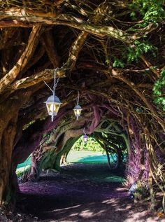 Yew Tunnel at Aberglasney Gardens, Wales, UK.