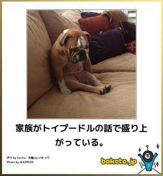 画像 : 写真で一言 ボケて(bokete) 【動物部門】傑作選 - NAVER まとめ