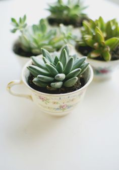 Inspired by Spring: Easy DIY Tea Cup Planter Party Favors, You can appreciate break fast or different time periods applying tea cups. Tea cups also provide ornamental features. Whenever you look at the tea cup types, you will dsicover that clearly. Succulent Terrarium, Cacti And Succulents, Planting Succulents, Planting Flowers, Succulent Care, Succulents Online, Succulent Ideas, Tea Cup Planter, Cactus Plante