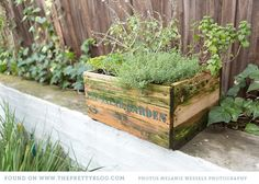 Small garden in wooden box | Photo: Melanie Wessels