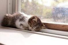ねむねむkitty on a windowsill