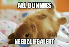 For when teh bunny falls and can't het uo