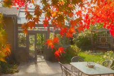 Blossom Garden Conservatory with Versicolour Japanese Maple Autumn colours Blossom Garden, Autumn Colours, Japanese Maple, Conservatory, Bloom, Gallery, Roof Rack, Winter Garden, Acer Palmatum