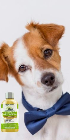 $15.99·Our Oatmeal Dog Shampoo And Conditioner is recommended by Vets and Specially formulated for pets with allergies to food, grass and flea bites. #dogoatmealshampoo #dogshampoo #dogconditioner #dogconditionerdiy #dogbathingshampoo #dogbathing Oatmeal Shampoo, Cat Shampoo, Shampoo And Conditioner, Dog Smells, Natural Vitamin E, Flea Treatment, Dog Eyes, Allergies, Sensitive Skin