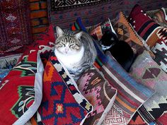 perne, Istanbul Pillowcases, Istanbul, Cushions, Symbols, Cats, Animals, Throw Pillows, Pillow Case Dresses, Toss Pillows