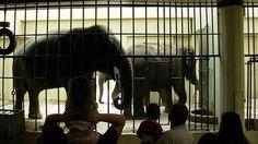 Sponsorizza Buffalo zoo: MOVE BUFFALO ELEPHANTS TO BIGGER HABITAT WITH WARMER TEMPERATURES IMMEDIATELY !