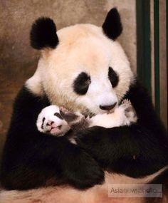 Pandaemonium..