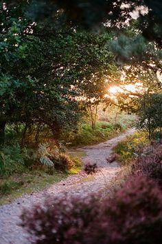 Sunset Forest Path, Suffolk, England