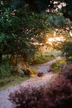 ~Sunset Forest Path, Suffolk, England~