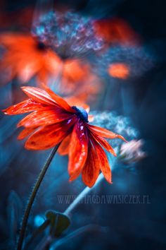 The explosion of Summer by Magda Wasiczek on 500px