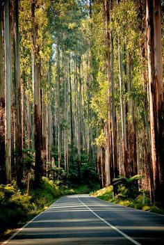 Black Spur Drive in Victoria / Australia (by Kellie Metcalf). This is one of the most stunning drives in Victoria. This stretch of road is between between Healesville and Marysville, about an east of Melbourne. Beautiful Roads, Beautiful World, Beautiful Places, Amazing Places, Drive In, The Places Youll Go, Places To See, Australia Travel, The Great Outdoors