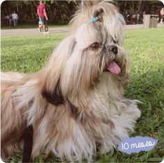My Dog Alvin