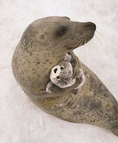 Perhaps the seal is in need of some company. Or maybe he may think that it's a baby seal in need of guidance and protection.