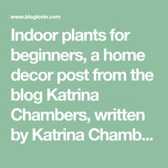 Indoor plants for beginners, a home decor post from the blog Katrina Chambers, written by Katrina Chambers on Bloglovin'