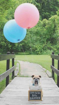 7 ways to announce your pregnancy with photos -someday- not anytime soon!!