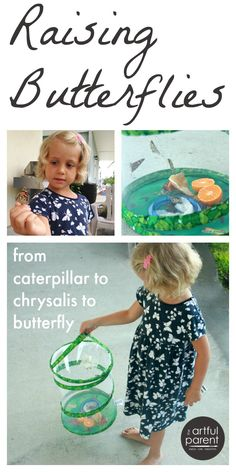 Raising butterflies with kids is magical and rewarding! Start with a butterfly house and caterpillars and watch them turn into chrysalises then butterflies.