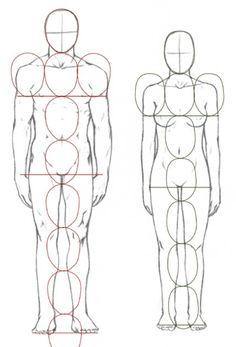 人体比例。男子七头半。女子七头。