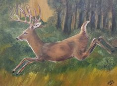 Running Buck by Judy Jones