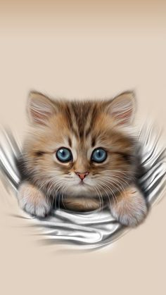 334 Best Cats Kittens Wallpaper Images In 2019 Cats Kitten