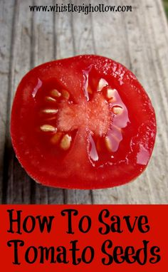 In 2013 I ventured into the world of saving seeds, and I started with tomatoes. I followed some lovely directions I found online from the Master Gardeners of Santa Clara County(this), and I will summarize them for you here. Selecting Your Tomatoes 1. Choose heirloom. Make sure you are NOT saving seeds from hybrid plants- …