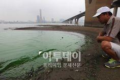 녹조가 전국적으로 확산되고 있다. 한강에 녹조현상이 계속 심해지면서 4년만에 조류주의보가 발령됐다. 10일 오전 서울 원효대교 인근에서 한 시민이 녹색 페인트를 뿌려놓은 듯한 한강을 걱정스럽게 바라보고 있다.