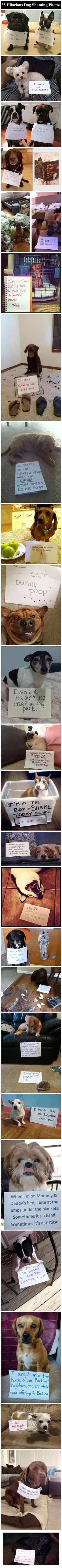 25 Hilarious Dog Shaming Photos Pictures, Photos, and Images for Facebook, Tumblr, Pinterest, and Twitter #funnypictures #dogsfunnyhumor