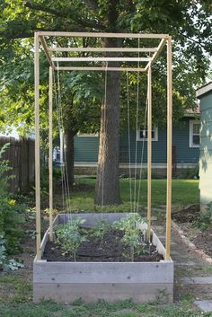 Pardon the Noob: Tomato Trellis Backyard Vegetable Gardens, Veg Garden, Vegetable Garden Design, Tomato Garden, Garden Trellis, Easy Garden, Outdoor Gardens, Garden Tomatoes, Tomato Planter