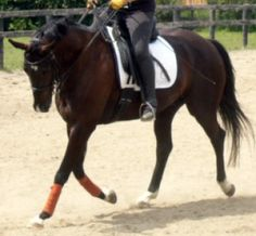 Why Interrupting the Horse's Stride Might Be Just the ticket for Better Balance - Horse Listening