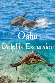 Oahu Dolphin Excursion More than dolphins! We came up close and personal with beautiful sea life during a trip with Dolphin Excursions Hawaii. Oahu Vacation, Honeymoon Vacations, Hawaii Honeymoon, Hawaii Travel, Travel Usa, Spain Travel, Honeymoon Cabin, Beach Travel, Mexico Travel