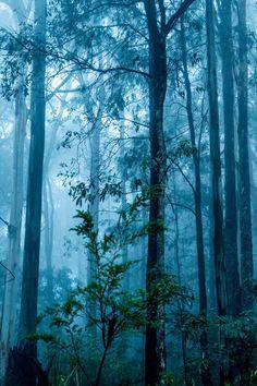 Beautiful Misty Blue Forest
