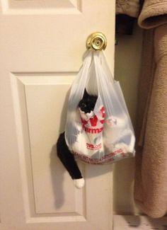 Gatos que Tomaron malas Decisiones: Ay. :(=^● ⋏ ●^=