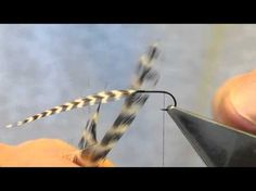 by Hans Weilenmann i originally learned this technique of hackling flies from several Oliver Edwards fly tying video where he uses it mostly for North Country Spiders but Han's brilliant demonstrat...