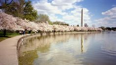 Photo 12 - Flower Festivals of the US - Travel Channel