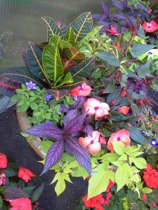 Blog With Images Container Flowers Annual Flowers Container Gardening