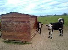 Resultado de imagen para comederos de madera para ganado