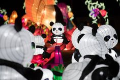 A group of pandas is seen on the opening night of the China Lights lantern festival Friday, January 19, 2018, at Craig Ranch Regional Park in North Las Vegas. The festival, which features nearly 50 silk and LED light displays comprised of over 1000 elements, runs through February 25th. CREDIT: Sam Morris/Las Vegas News Bureau