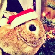 Bunny Is Shocked at the Amount of Presents You Gave Him - December 25, 2011