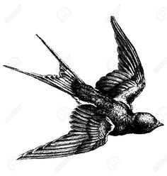 Swallow Bird Images, Stock Pictures, Royalty Free Swallow Bird ...