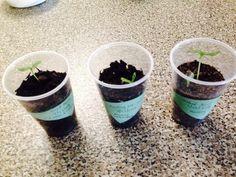 When the plants grow little bigger