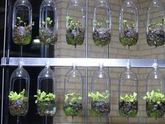 garden design used plastic bottles hanging - Diy Garden Projects Diy Garden, Herb Garden, Garden Projects, Gravel Garden, Garden Water, Garden Oasis, Garden Boxes, Garden Crafts, Garden Art