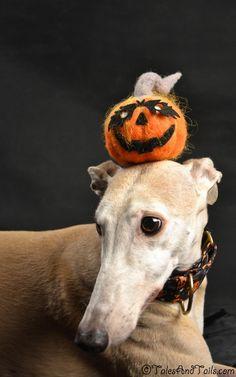 Pumpkin Head -- Tales and Tails