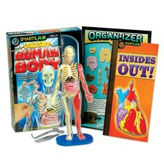 The Human Body Model helps children learn how the human body works! Its removable squishy organs and representative skeletal, vascular, and muscular systems make for great educational fun. ($33.99)  #GiftGuide