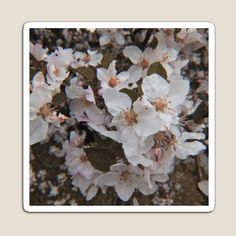 White Springs, Lip Designs, Spring Blossom, Off The Wall, Wood Print, Ipad Case, Magnets, Vibrant Colors