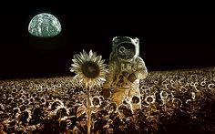 not-all-moonflowers-are-the-same-tom-colbie-splash