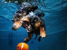 Underwater Dog Photography 1