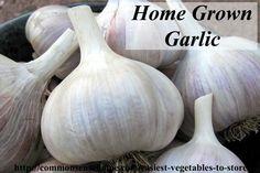 Easiest Vegetables to Store - Garlic