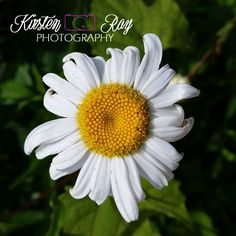 #WhiteFlower #flower #nature #beautiful #green #Etsy #yellow #photography #ArtForSale #WallArt #HomeDecor #SouthernIndiana #Indiana ©Kirsten Ray Photography