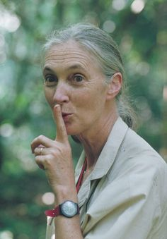 Shhhhh.....Jane Goodall is famous for a 45-year study of social interactions of wild chimpanzees in Gombe Stream National Park, Tanzania.
