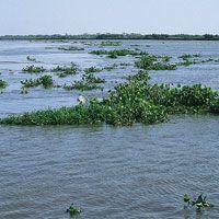Vegetación flotante arrastrada por las aguas del Bajo Magdalena.